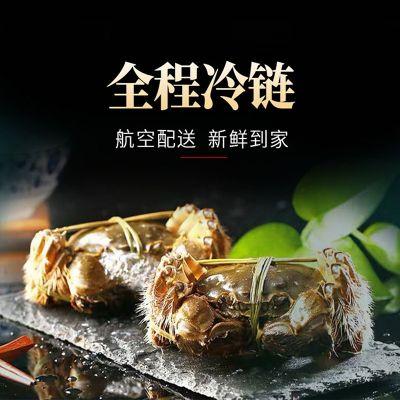 阳澄湖 散养大闸蟹 典藏型(公蟹:4.8两5只+母蟹:3.4两5只)共10只
