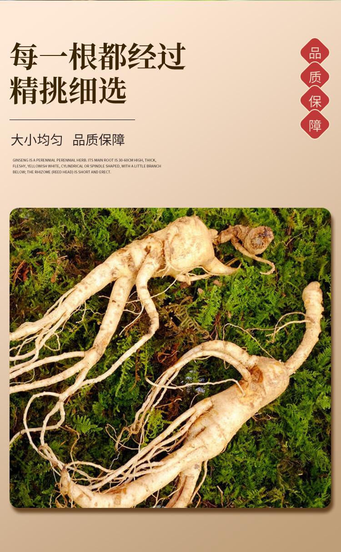 人参(1)_04.jpg