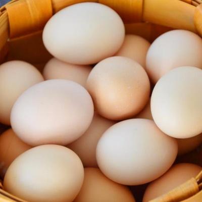 山东青岛 土鸡蛋 40枚/盒